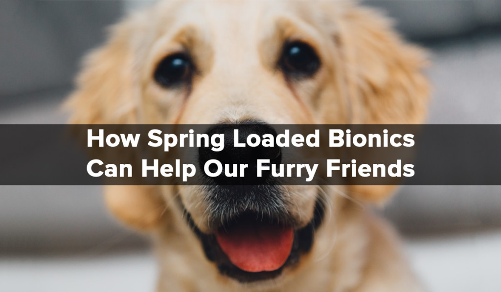 Spring Loaded Technology - Blog - Furry Friends