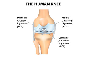 knee ligament tear? spring loaded tech diagram of fuse compartment of mitsubishi eclipse 2001 diagram of torn acl