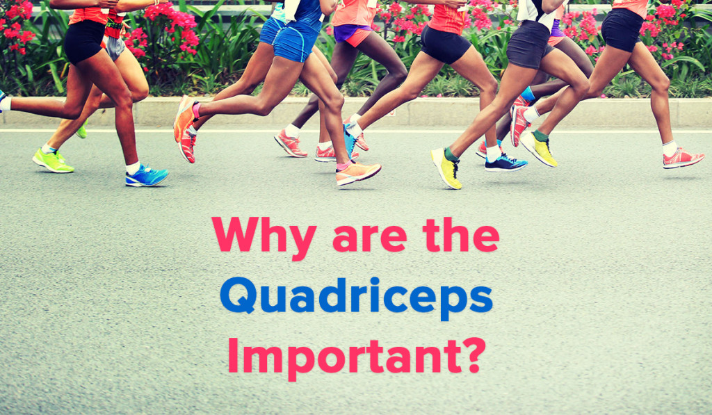 Spring Loaded Technology - Blog - Why are the Quadriceps Important