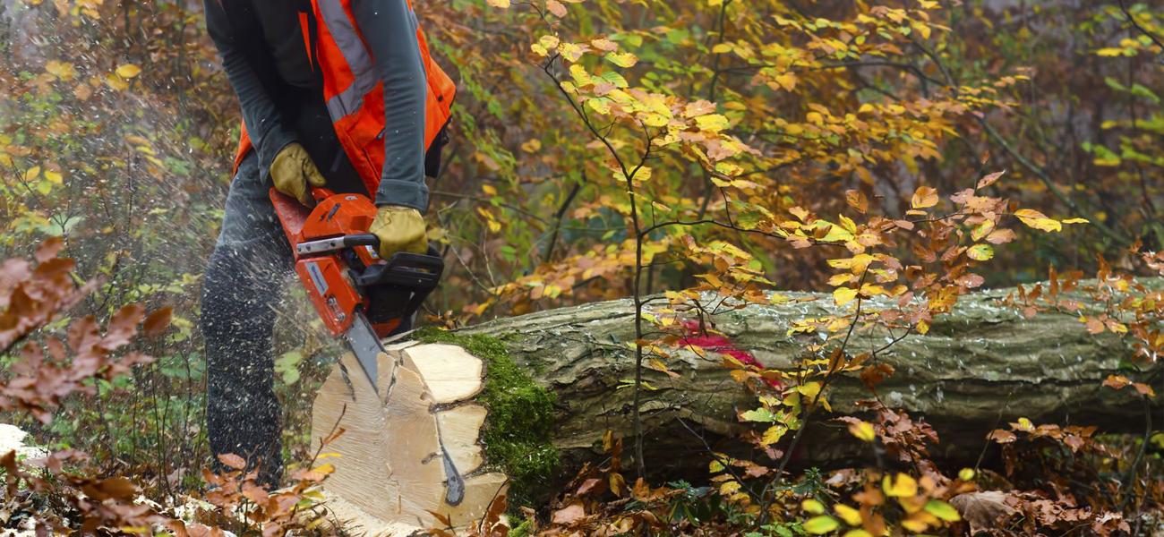 Forestry worker needs knee brace