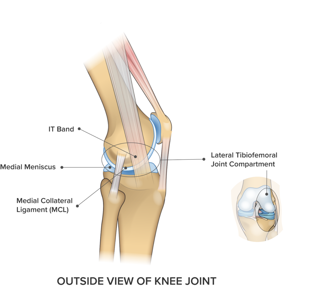 Knee Anatomy Lateral View