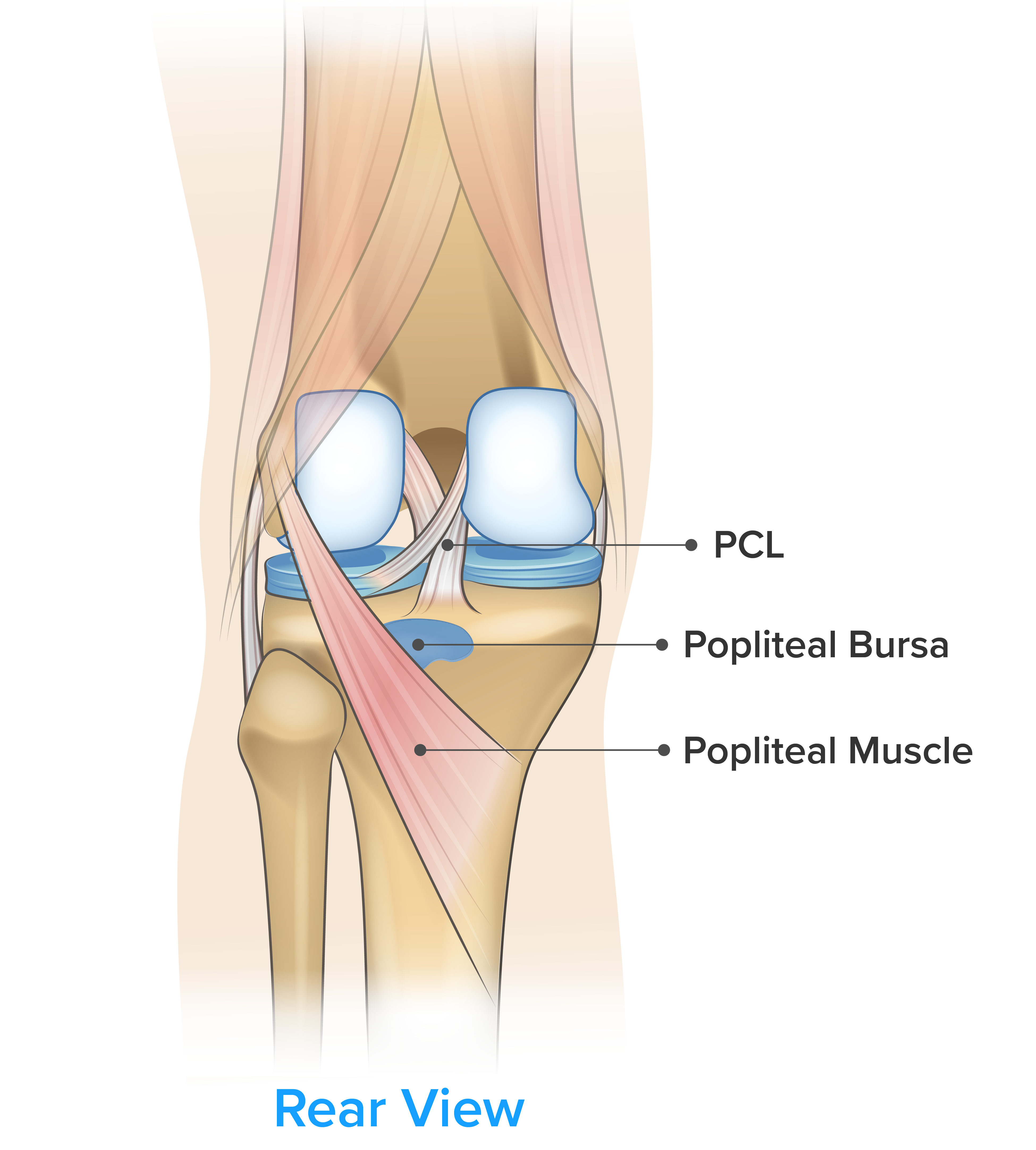 Traumatic Disorders of the Knee