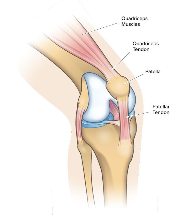 diagram of knee anatomy including quadriceps tendon, patella and patellar tendon